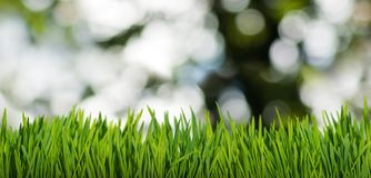 草和抽象泡影在庭院特写镜头 库存照片