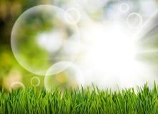 草和抽象泡影在绿色的庭院弄脏了背景 免版税库存图片