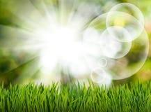 草和抽象泡影在绿色的庭院弄脏了背景 库存图片