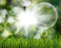 草和抽象泡影在绿色的庭院弄脏了背景 免版税库存照片