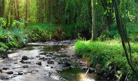 草和日落的领域 免版税库存图片