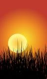 草和日落背景 免版税库存照片