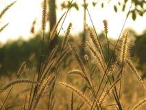 草和日落 库存图片