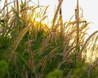 草和星期日 库存照片