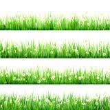 绿草和春黄菊在自然。EPS 10 免版税库存图片