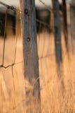 草和木岗位 库存图片