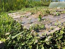 草和木板条在沼泽 库存图片