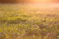 草和杂草 库存照片