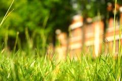 绿草和树和红色房子在背景中 库存图片
