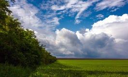 草和树在暴风云背景  库存图片