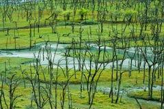 草和树在西藏,中国 免版税图库摄影