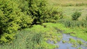 草和树,俄罗斯丛林的浅河  影视素材