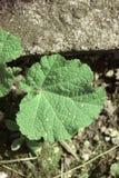 草和植物 免版税库存照片