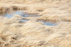 草和水风景背景在大盐湖 免版税库存照片