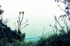 草和海 免版税库存照片