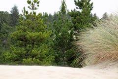 草和灌木在沙子 免版税库存照片