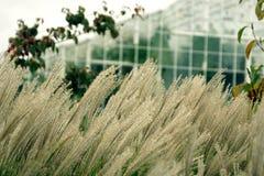 草和玻璃温室,淡色 库存照片