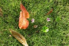 绿草和秋叶 图库摄影