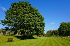 草和篱芭和长凳 库存照片