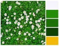 草和花与调色板颜色样片 库存照片
