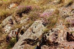 草和花厚实的丛林  免版税库存照片
