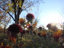 草和花在草甸日落的 在紫外颜色的花卉背景 免版税图库摄影