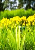 草和花床在公园 免版税库存照片