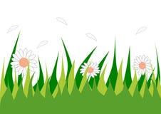 草和花 免版税库存照片