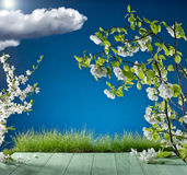 草和苹果在蓝天背景开花  免版税图库摄影