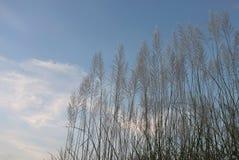 草和草花芦苇  库存照片
