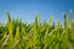 草和蓝天 免版税库存图片