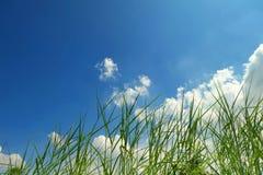 草和蓝天 库存图片