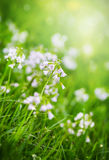 绿草和野花与露滴 免版税图库摄影