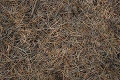 草和锥体 库存图片