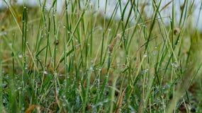 草和露水 图库摄影