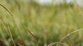 草和露水 免版税库存图片
