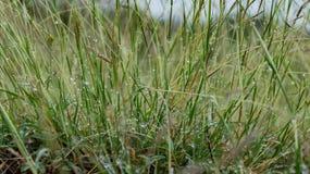 草和露水 免版税库存照片