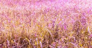 草和颜色 图库摄影
