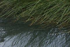 草和水 免版税库存照片