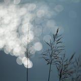 草和bokeh 免版税图库摄影