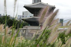 草和Dongdaemun在汉城 免版税图库摄影