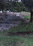 草围拢的石台阶 免版税库存图片