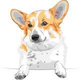 草图狗Pembroke威尔士小狗微笑 免版税库存图片