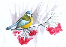 草图 蓝冠山雀坐一个山脉灰分支用红色莓果 向量例证