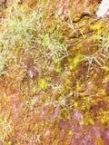 草土壤绿色黄色 免版税库存照片