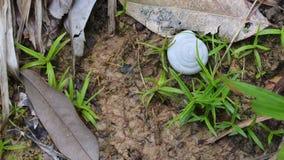 草土壤 库存图片