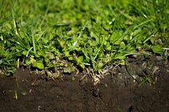 草土壤 免版税图库摄影