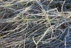 草在一个早晨 图库摄影