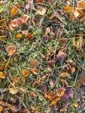 草在一个早晨 库存图片
