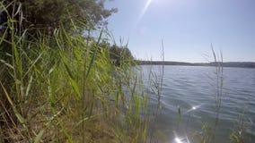 草在一个蓝色湖的风摇摆在室外的森林里 股票视频